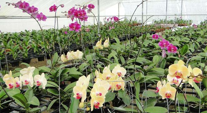 Vườn thực nghiệm phong lan